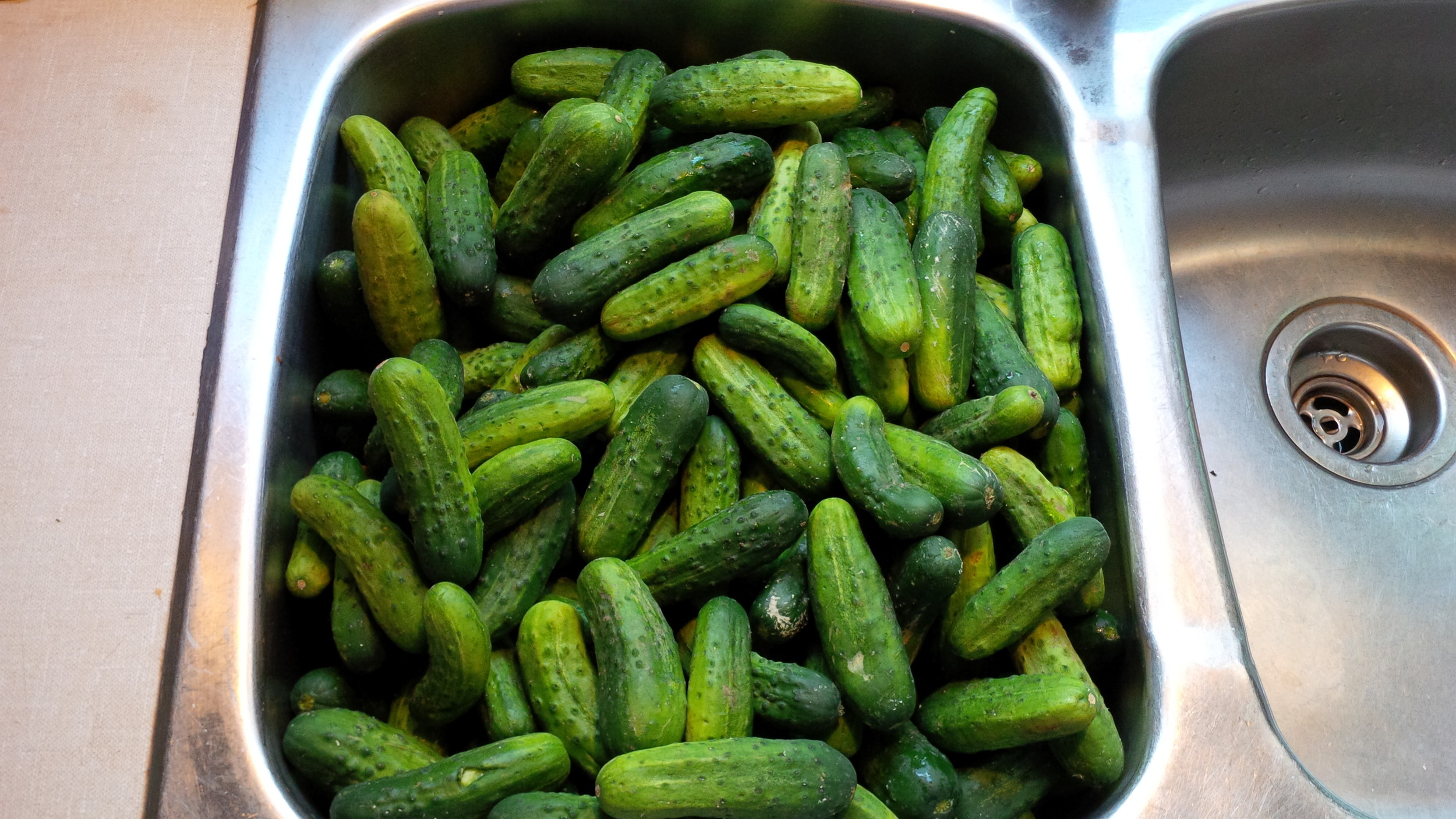 This is what a 1/2 bushel of mini-cucumbers looks like when you haul it home from the Farmers' Market and put them in the sink to wash. I was feeling ambitious. The market tends to do that to me at this time of year.