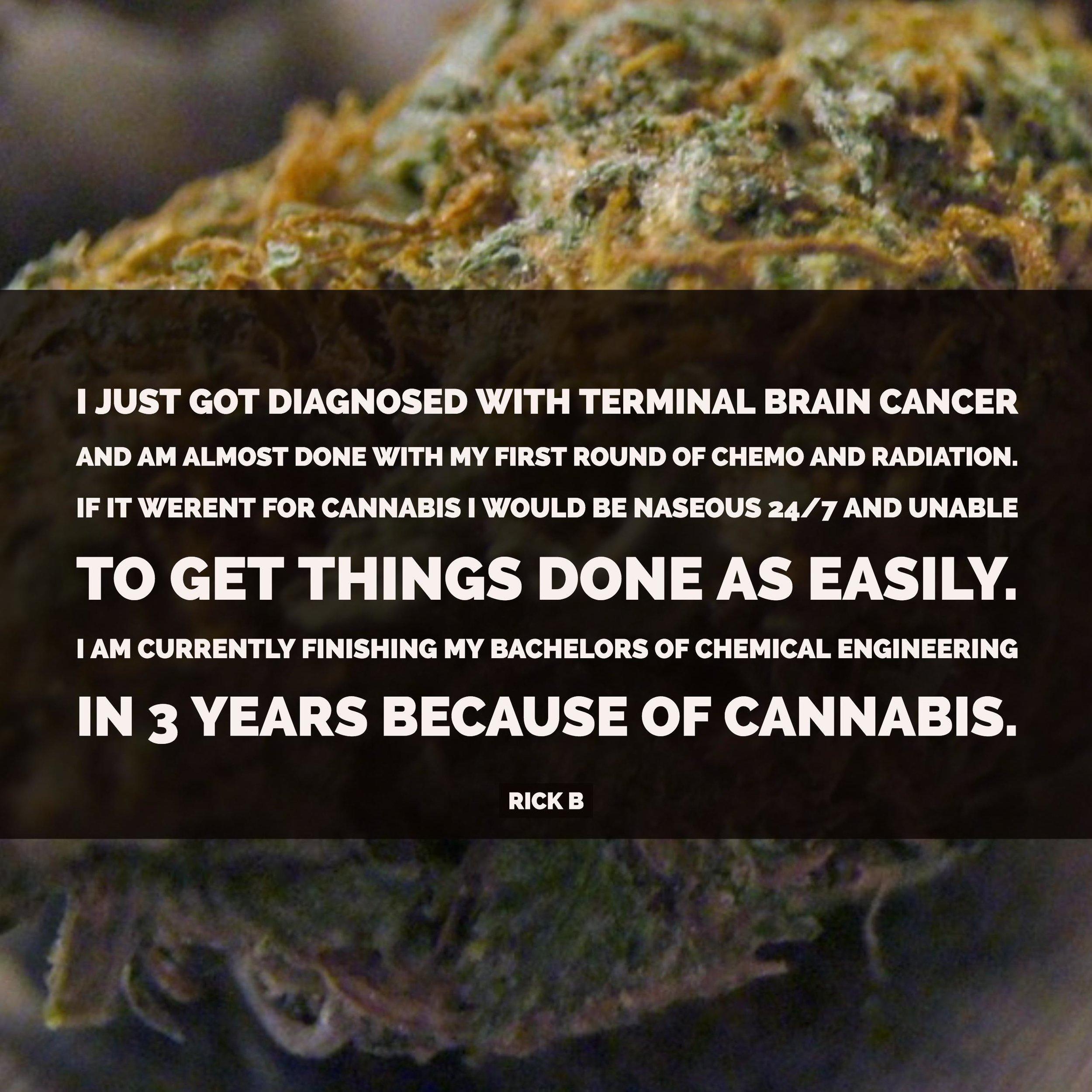 terminal brain cancer and cannabis