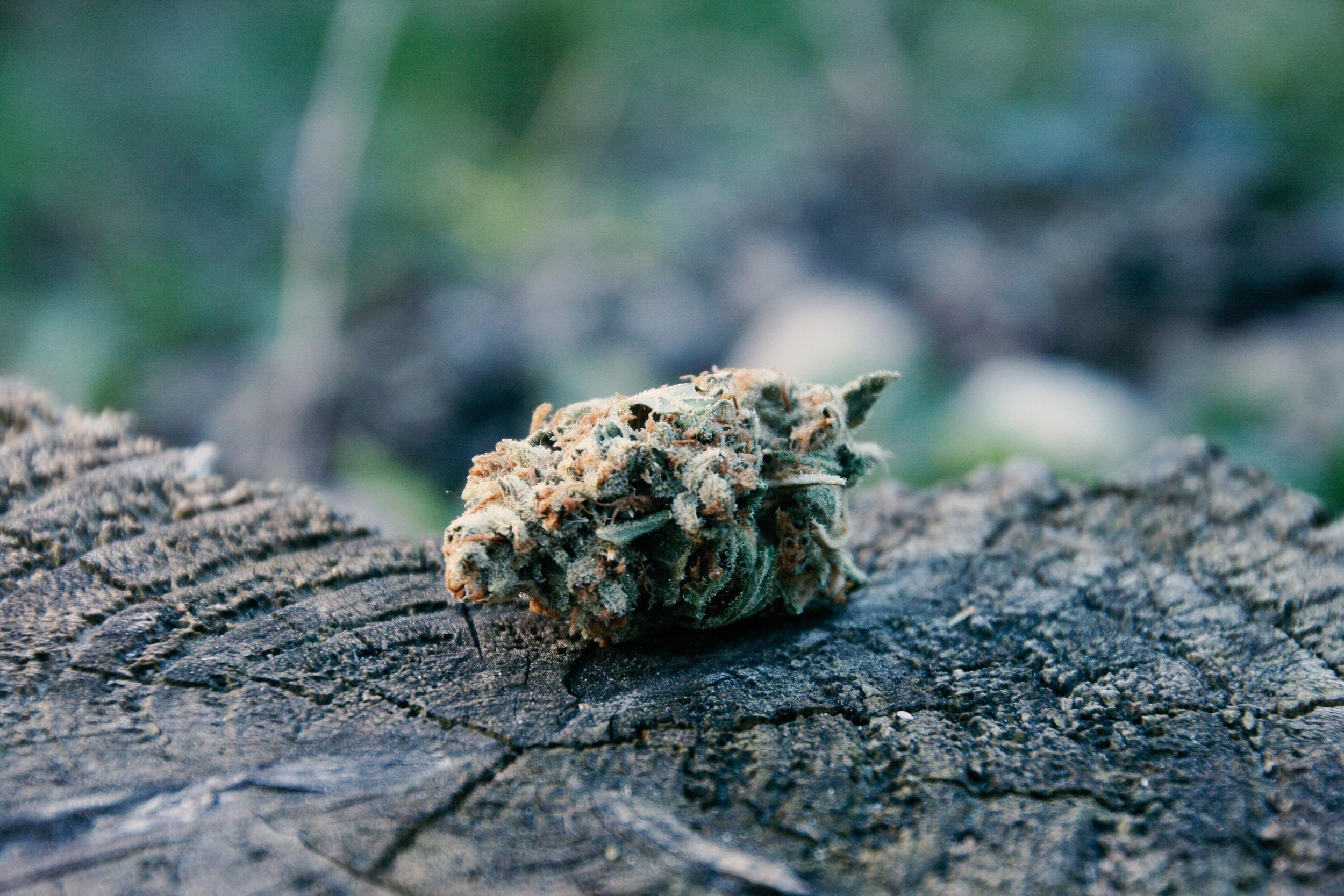 marijuana terpenes, what you need to know