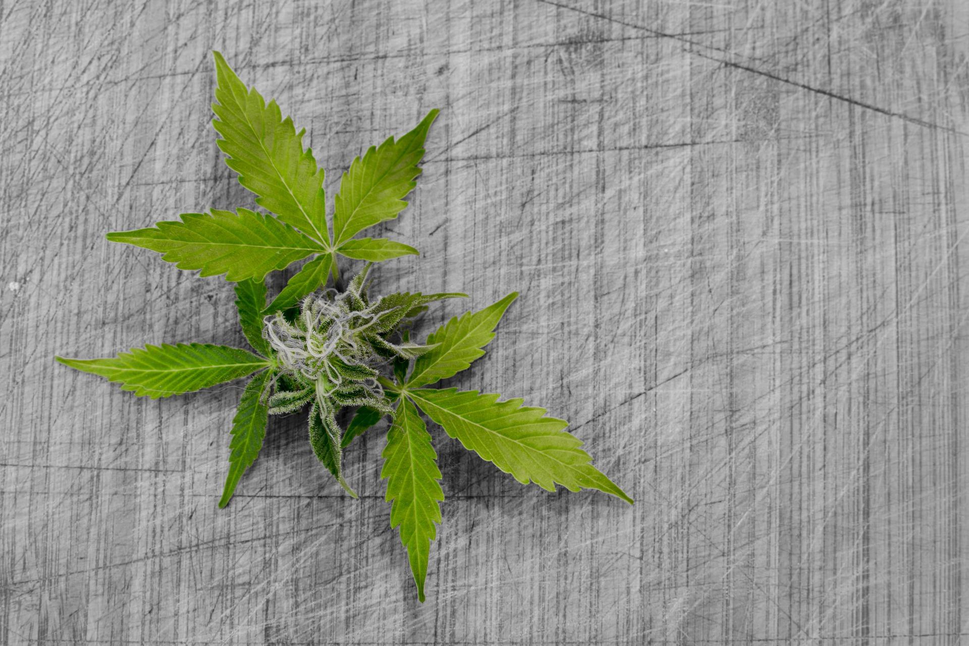 leaf-3065626_1920.jpg