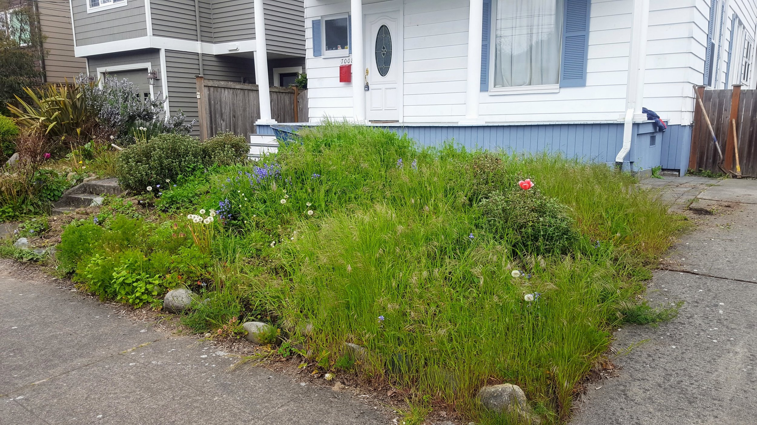 Clea before rain garden.jpg