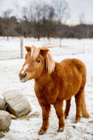 Horse-Photography-Saratoga-Springs-NY05.jpg