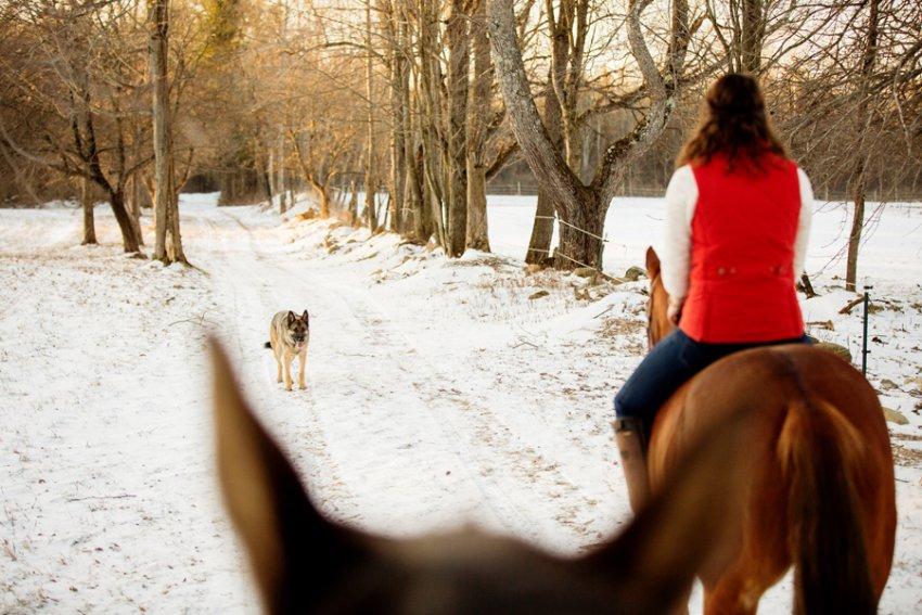 Horse-Photography-Saratoga-Springs-NY19.jpg