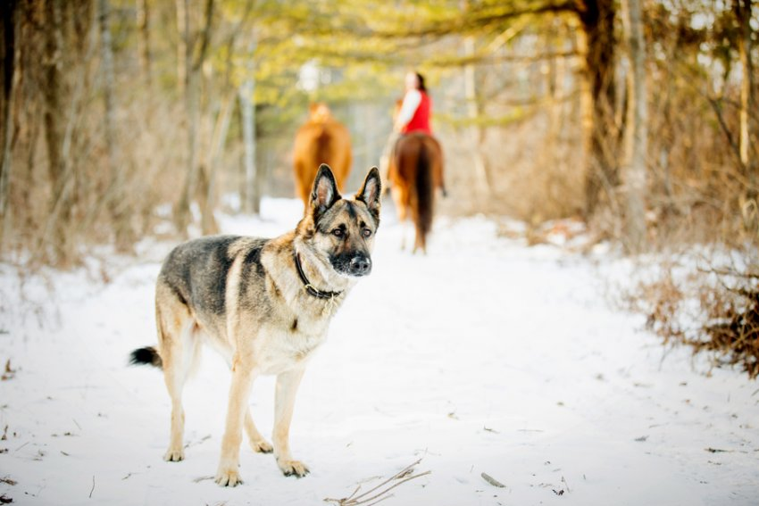 Horse-Photography-Saratoga-Springs-NY22.jpg
