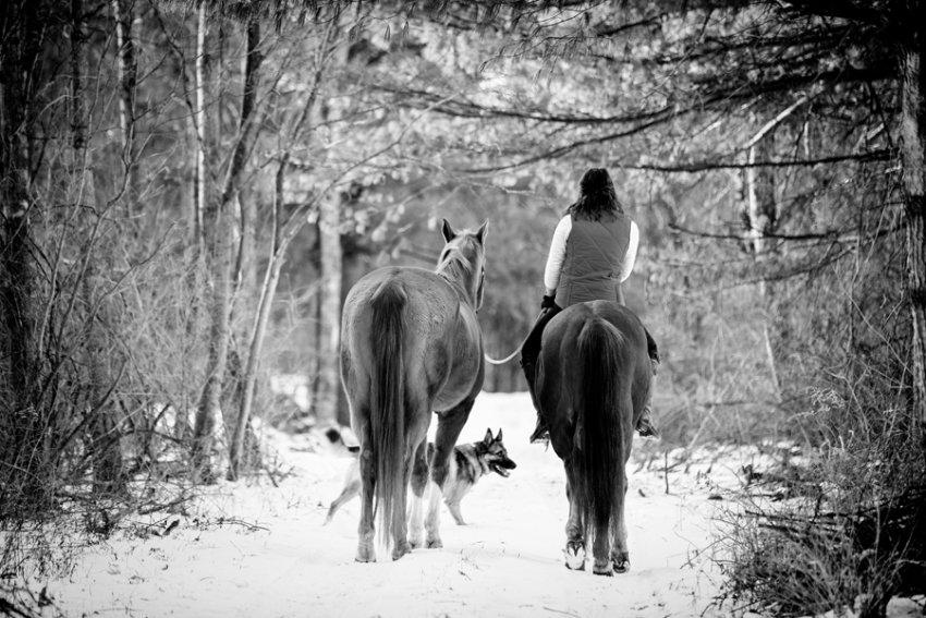 Horse-Photography-Saratoga-Springs-NY24.jpg