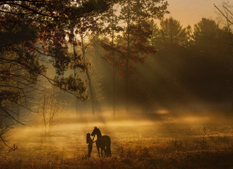 Equine-photographer-saratoga-ny14.jpg