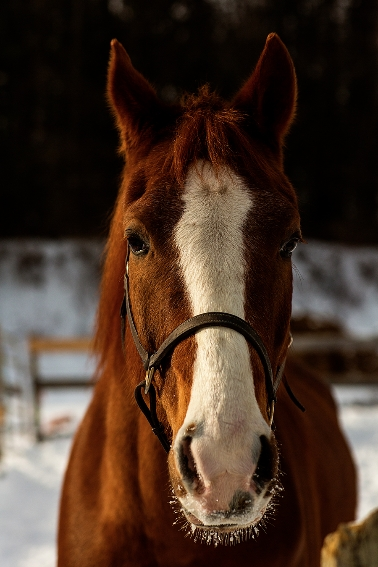 tracey-buyce-horse-photography83.jpg