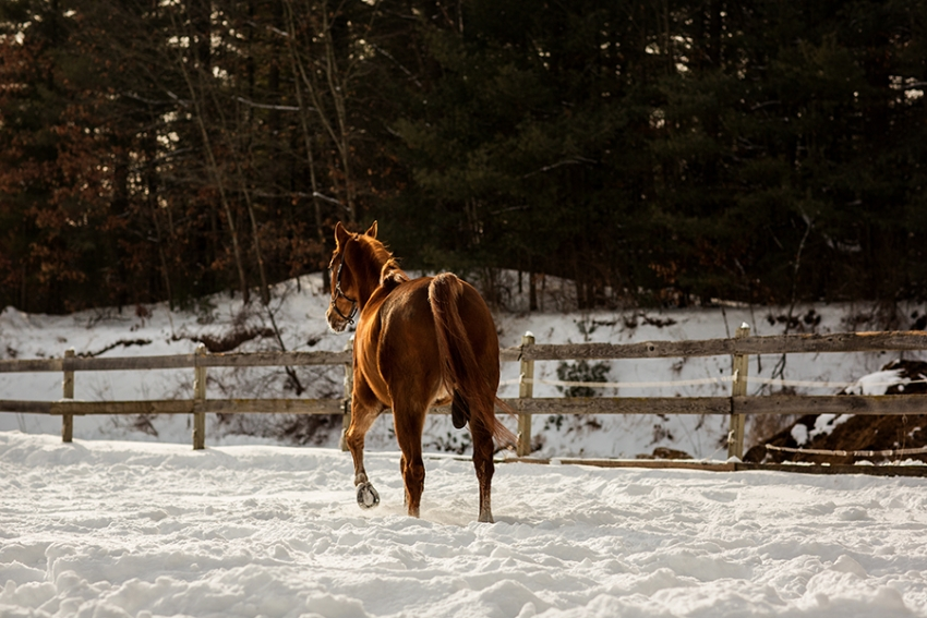tracey-buyce-horse-photography86.jpg