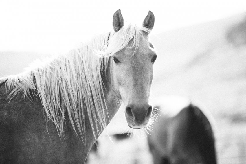 tracey-buyce-horse-photography26.jpg