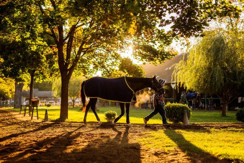 Tracey-Buyce-Photography-horse-photos09.jpg