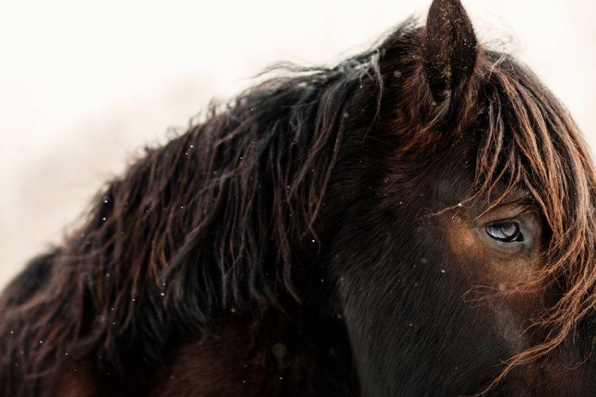 Tracey-Buyce-Photography-horse-photos10.jpg