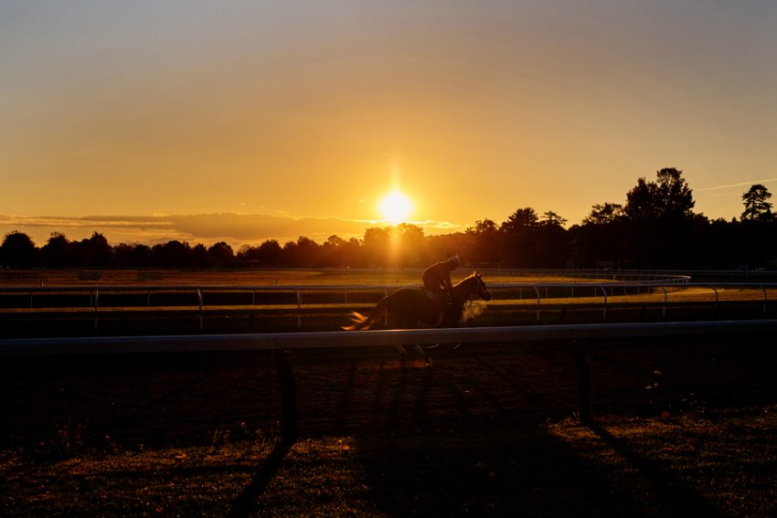 Tracey-Buyce-Photography-horse-photos11.jpg