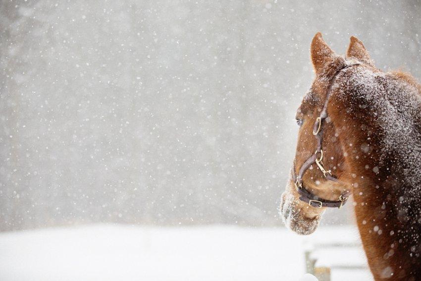 Tracey-Buyce-Photography-horse-photos17.jpg