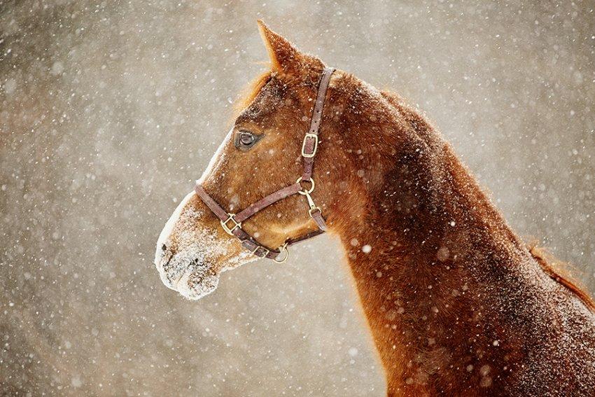 Tracey-Buyce-equine-photographer001.jpg