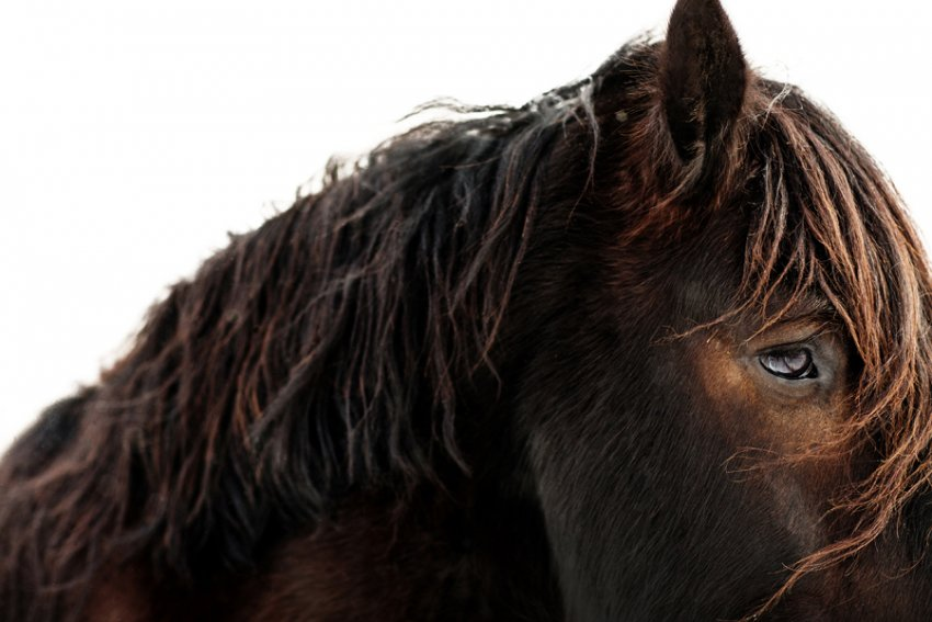 Tracey-Buyce-equine-photographer005.jpg