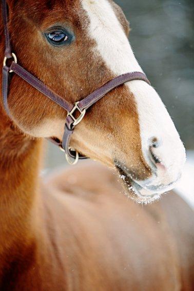 Tracey-Buyce-equine-photographer006.jpg