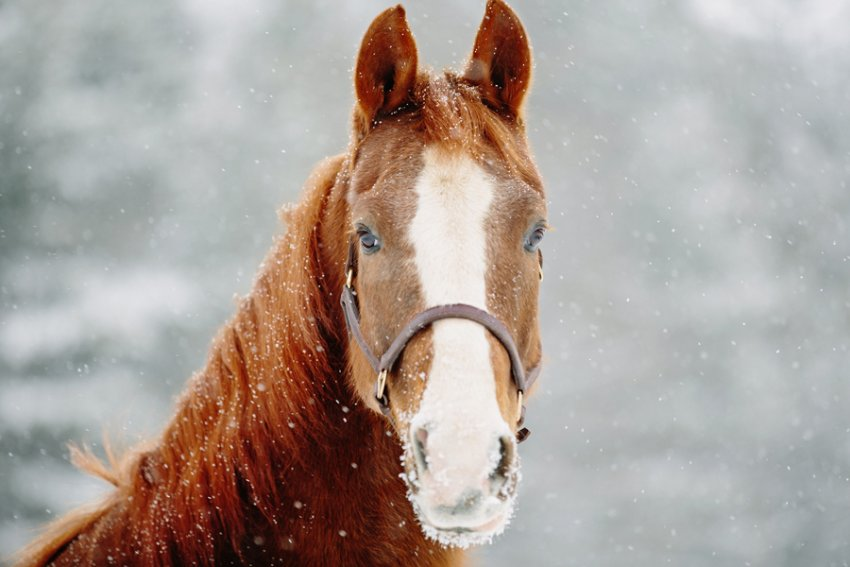 Tracey-Buyce-equine-photographer009.jpg