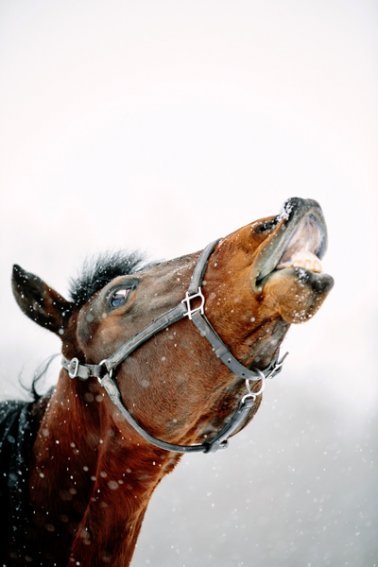 Tracey-Buyce-equine-photographer015.jpg
