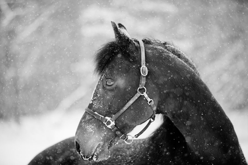 Tracey-Buyce-equine-photographer021.jpg