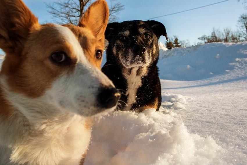 saratoga-ny-dog-photographer89.jpg