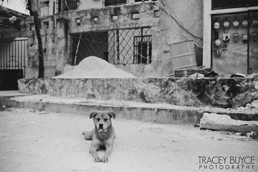 saratoga-springs-ny-dog-photographer59.jpg