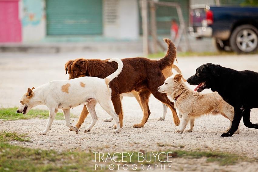 saratoga-springs-ny-dog-photographer60.jpg