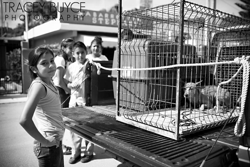 saratoga-springs-ny-dog-photographer75.jpg