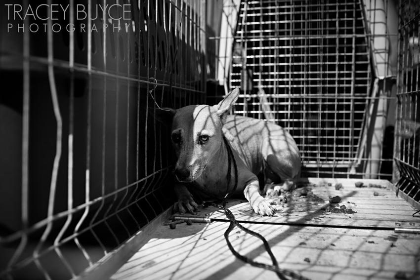saratoga-springs-ny-dog-photographer76.jpg