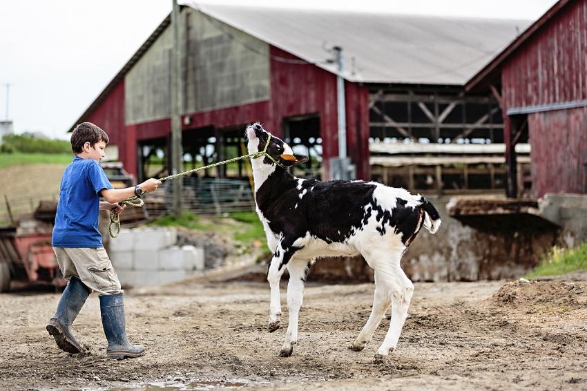tracey-buyce-photography-farms09.jpg
