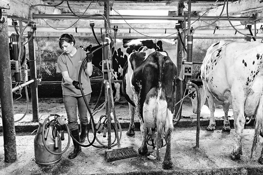 tracey-buyce-photography-farms14.jpg