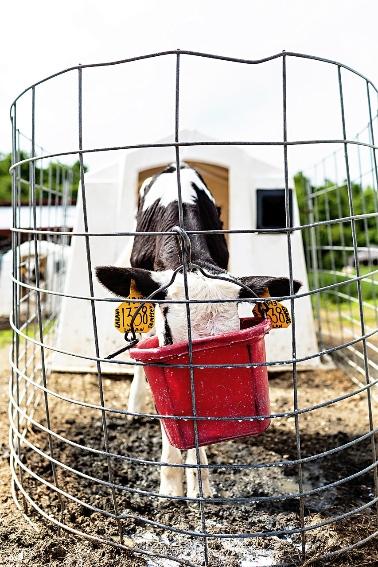 tracey-buyce-photography-farms17.jpg