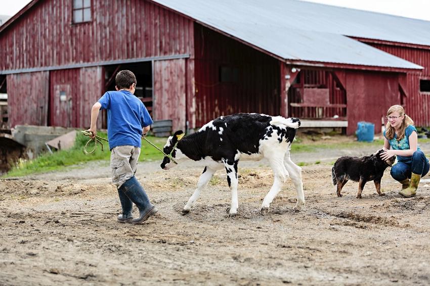 tracey-buyce-photography-farms20.jpg