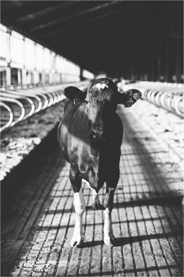 tracey-buyce-photography-farm_0147.jpg