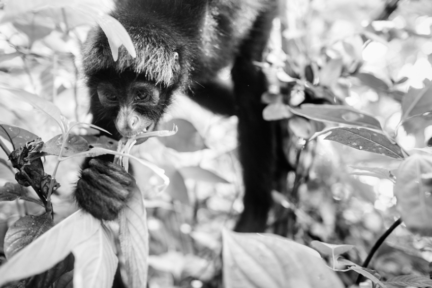 tracey-buyce-animal-photographer-monkeys-bolivia147.jpg