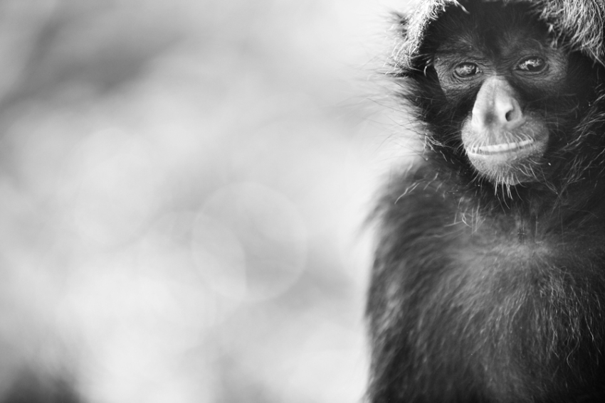 tracey-buyce-animal-photographer-monkeys-bolivia162.jpg