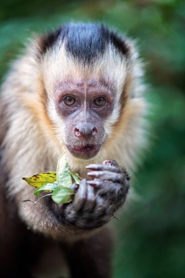 tracey-buyce-animal-photographer-monkeys-bolivia176.jpg