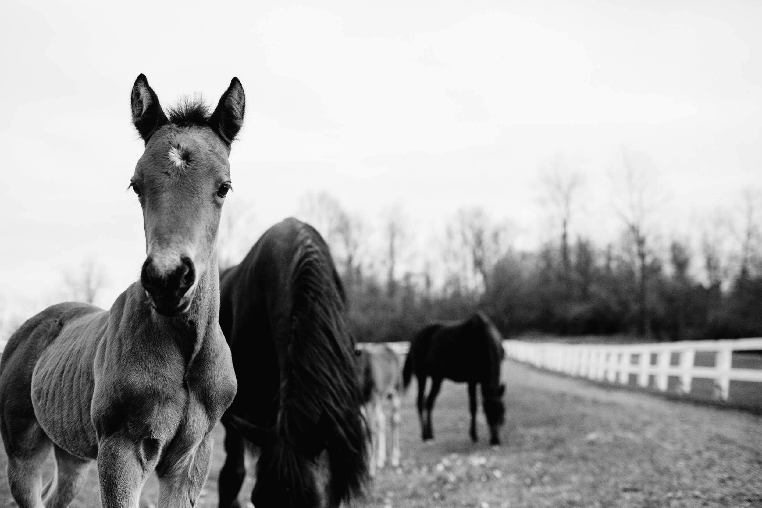 Fine Art Horse Photography14.jpg