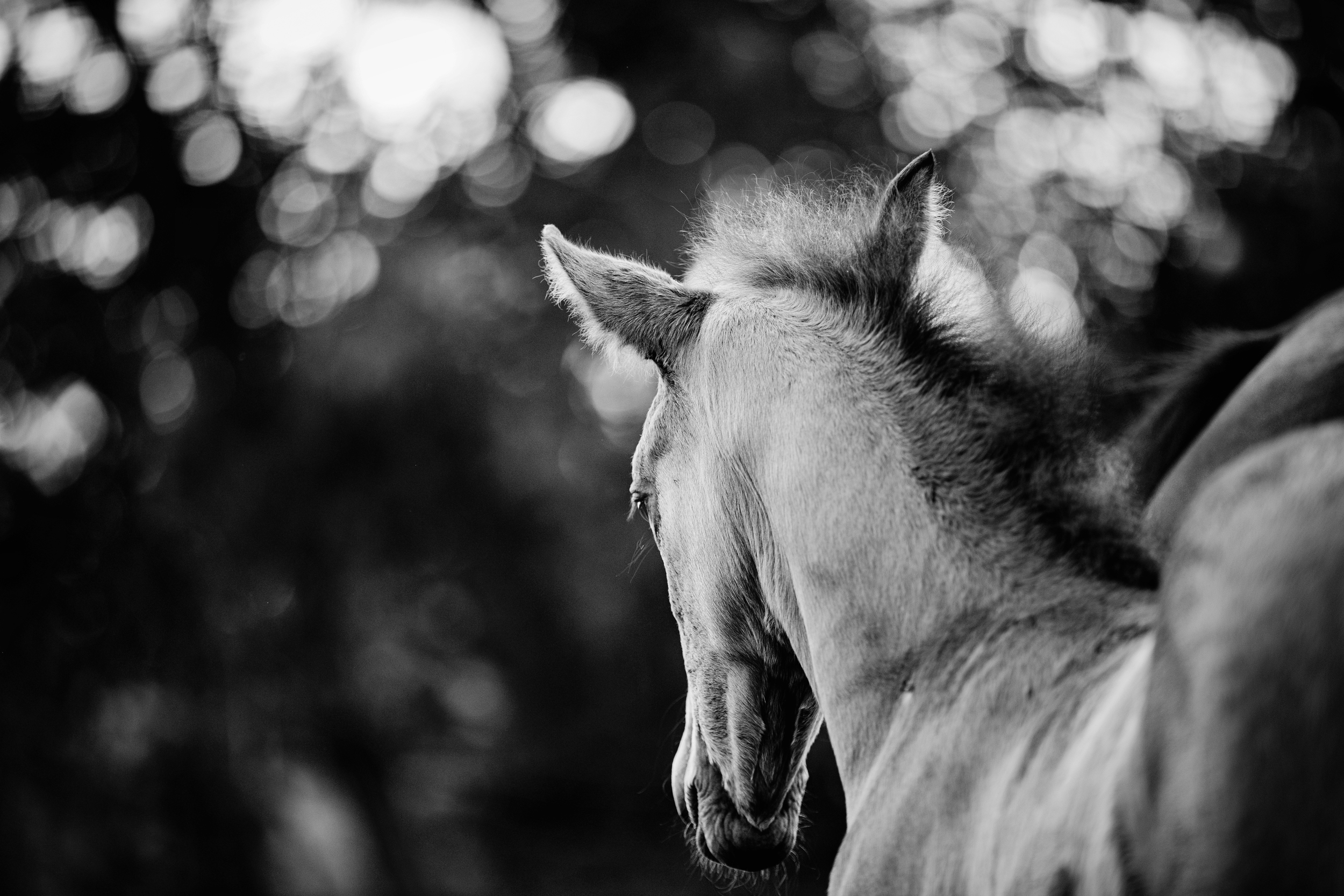 Fine Art Horse Photography31.jpg