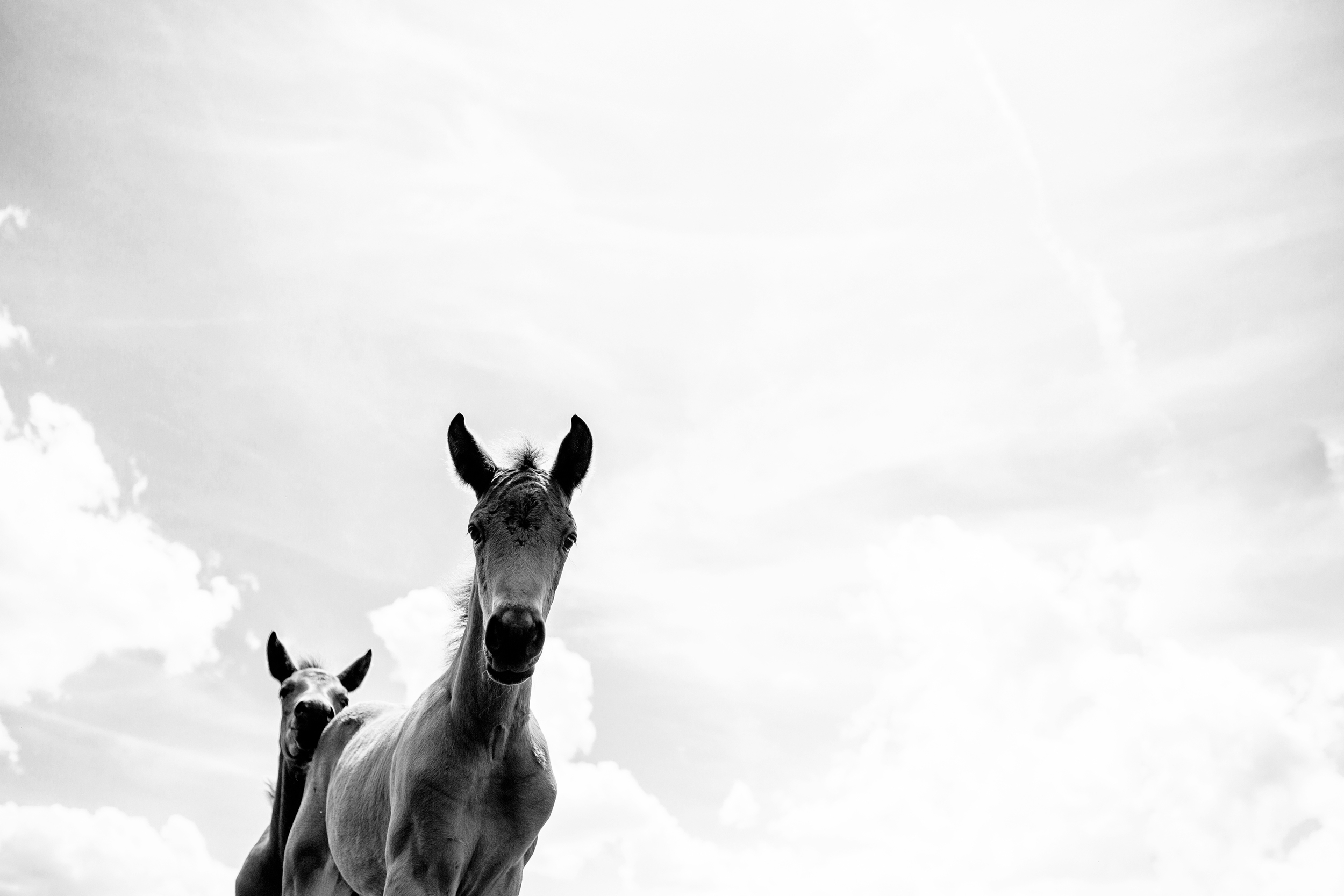 Fine Art Horse Photography32.jpg