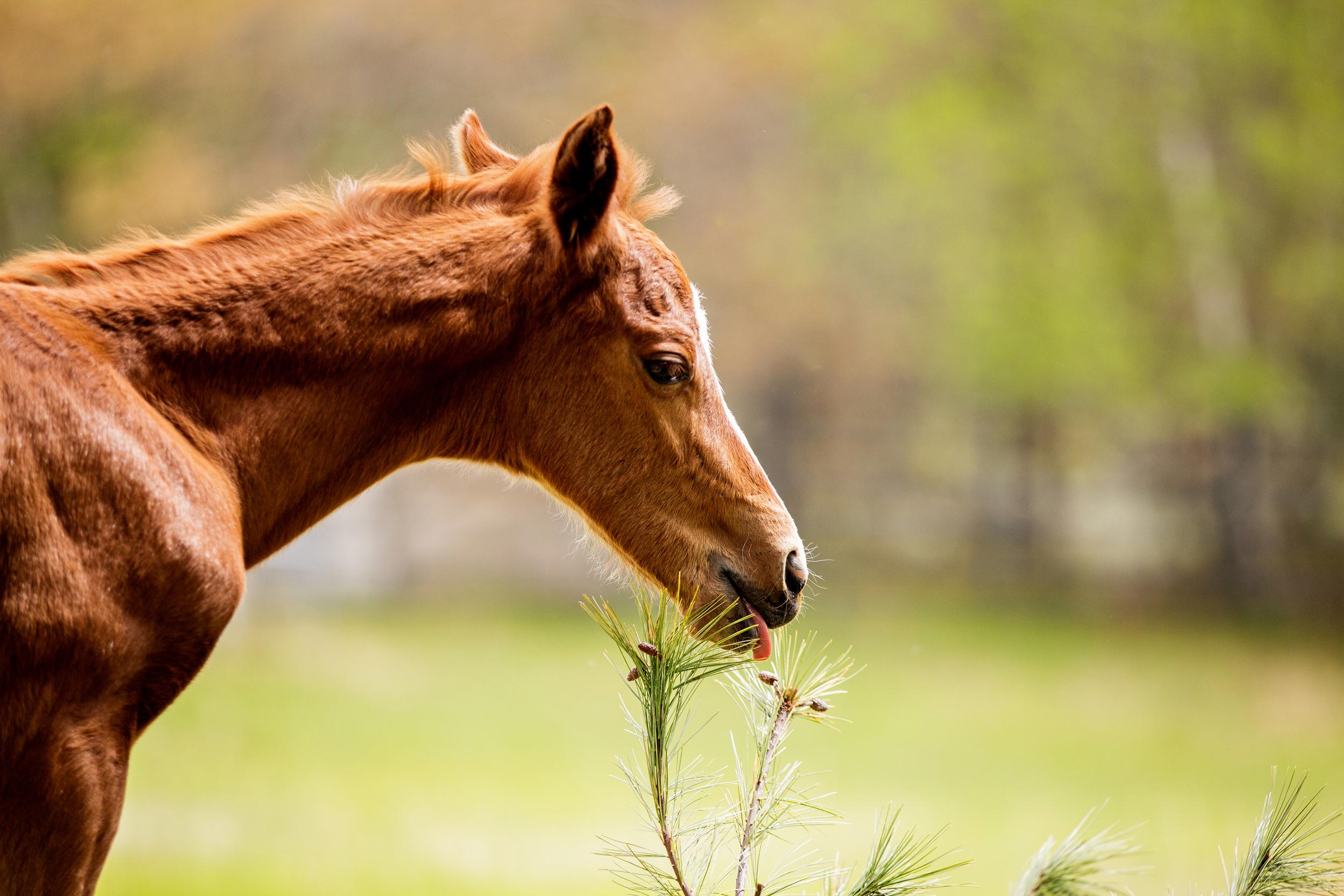 Horse Photography Saratoga Springs NY23.jpg