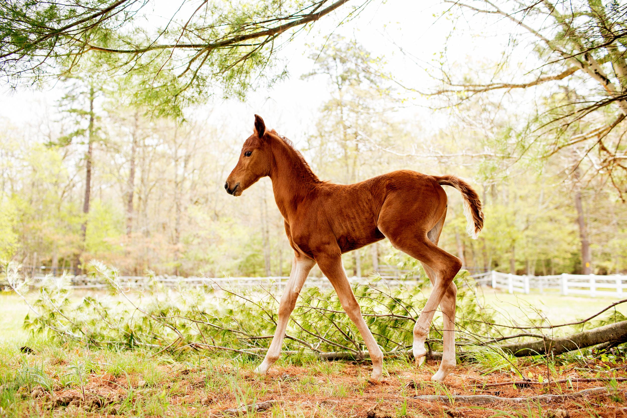 Horse Photography Saratoga Springs NY24.jpg