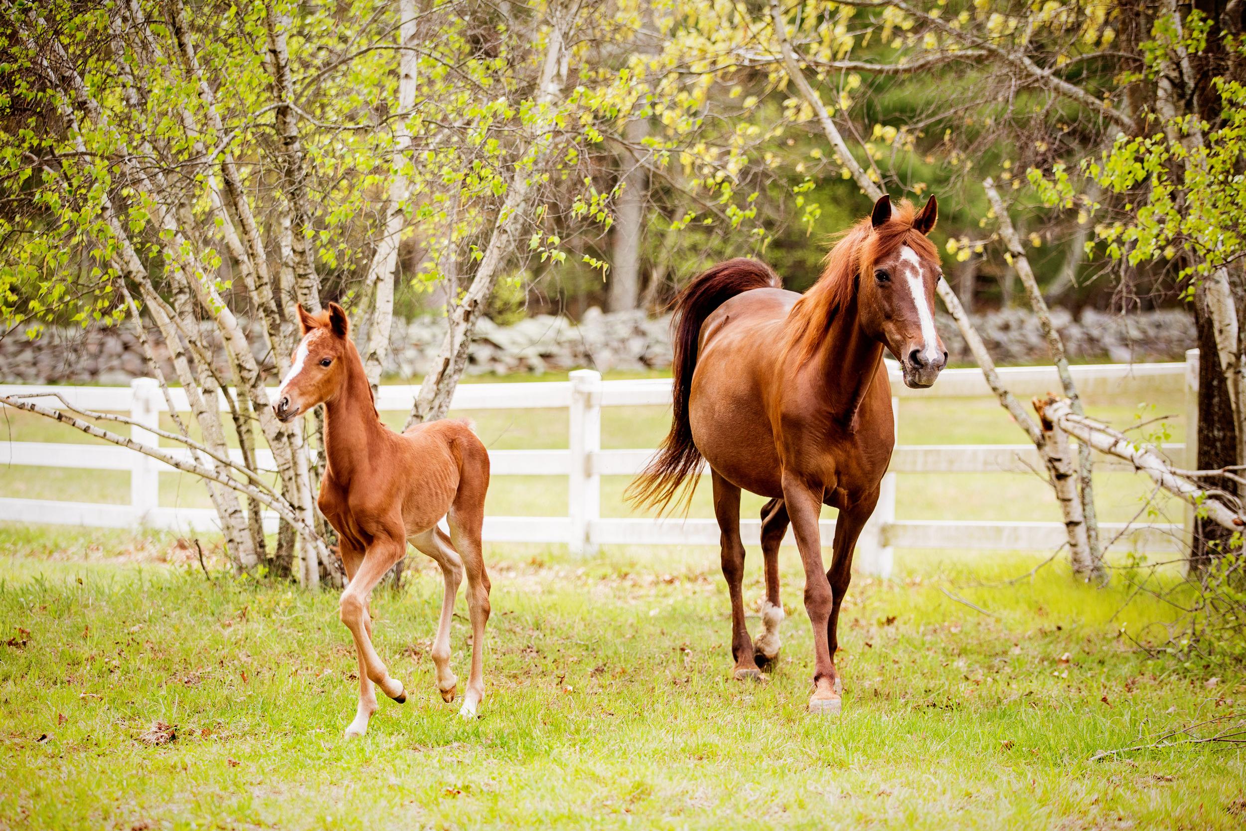 Horse Photography Saratoga Springs NY28.jpg