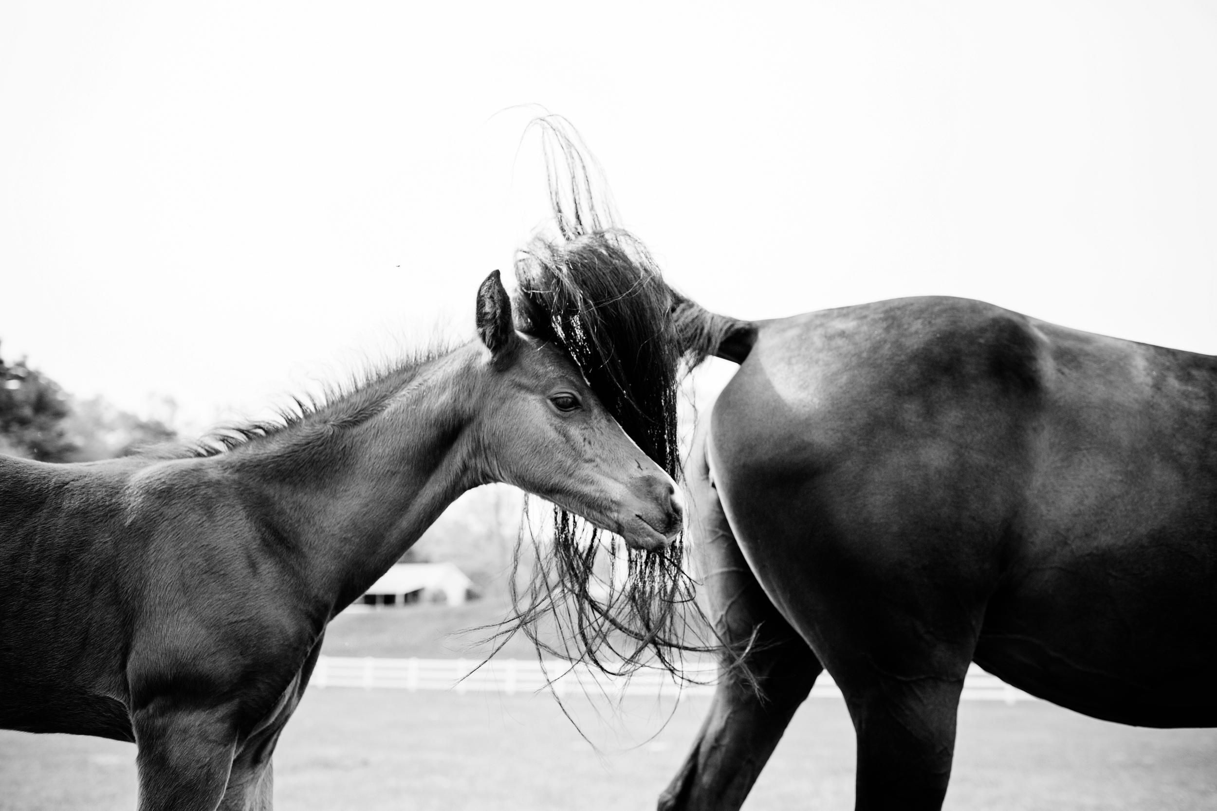 Horse Photography Saratoga Springs NY31.jpg