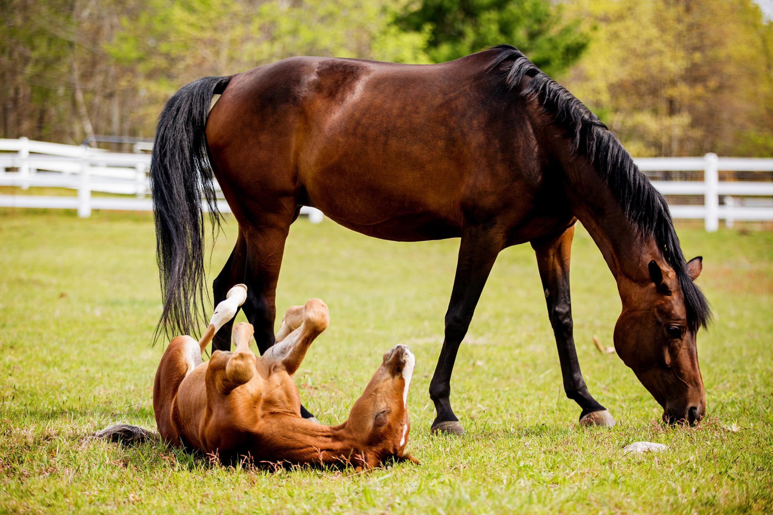 Horse Photography Saratoga Springs NY34.jpg
