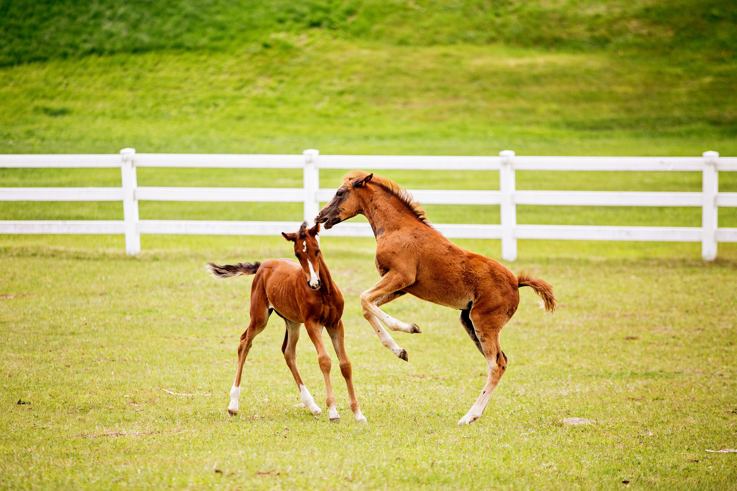 Horse Photography Saratoga Springs NY35.jpg