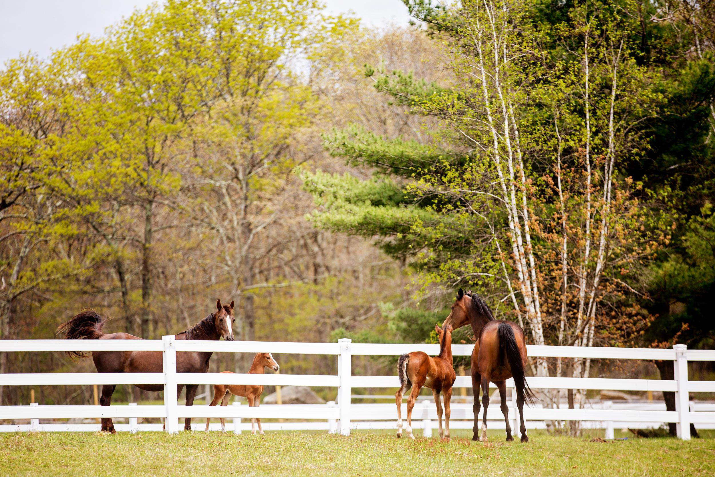 Horse Photography Saratoga Springs NY36.jpg