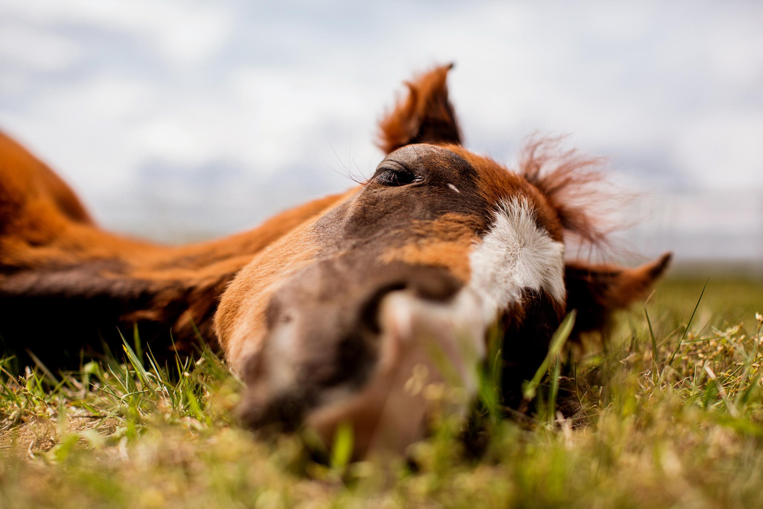 Horse Photography Saratoga Springs NY38.jpg