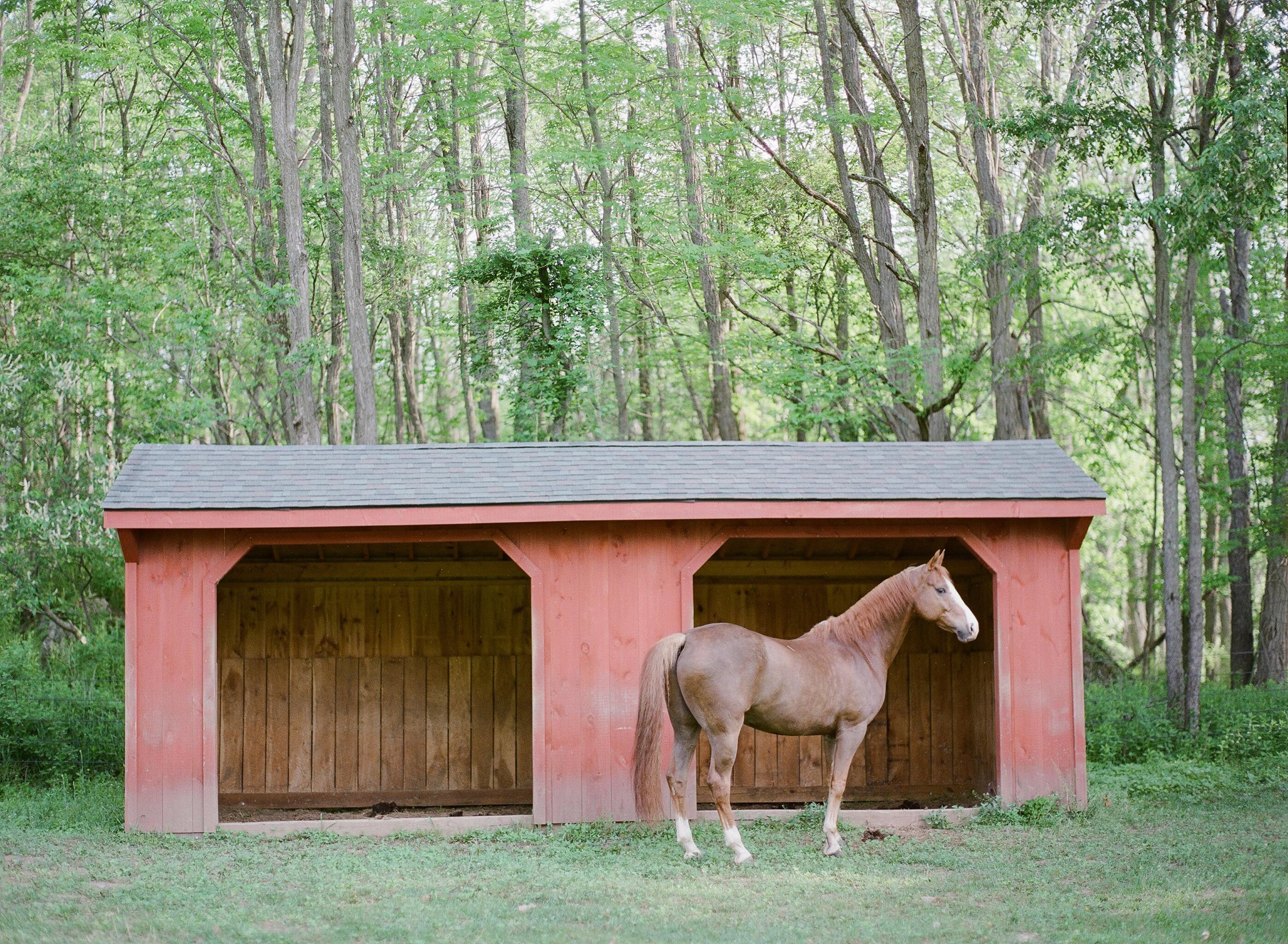 Horse Photography Saratoga Springs NY02.jpg