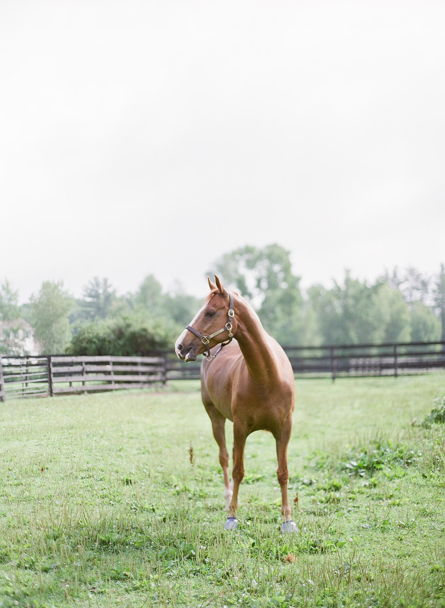 Horse Photography Saratoga Springs NY03.jpg