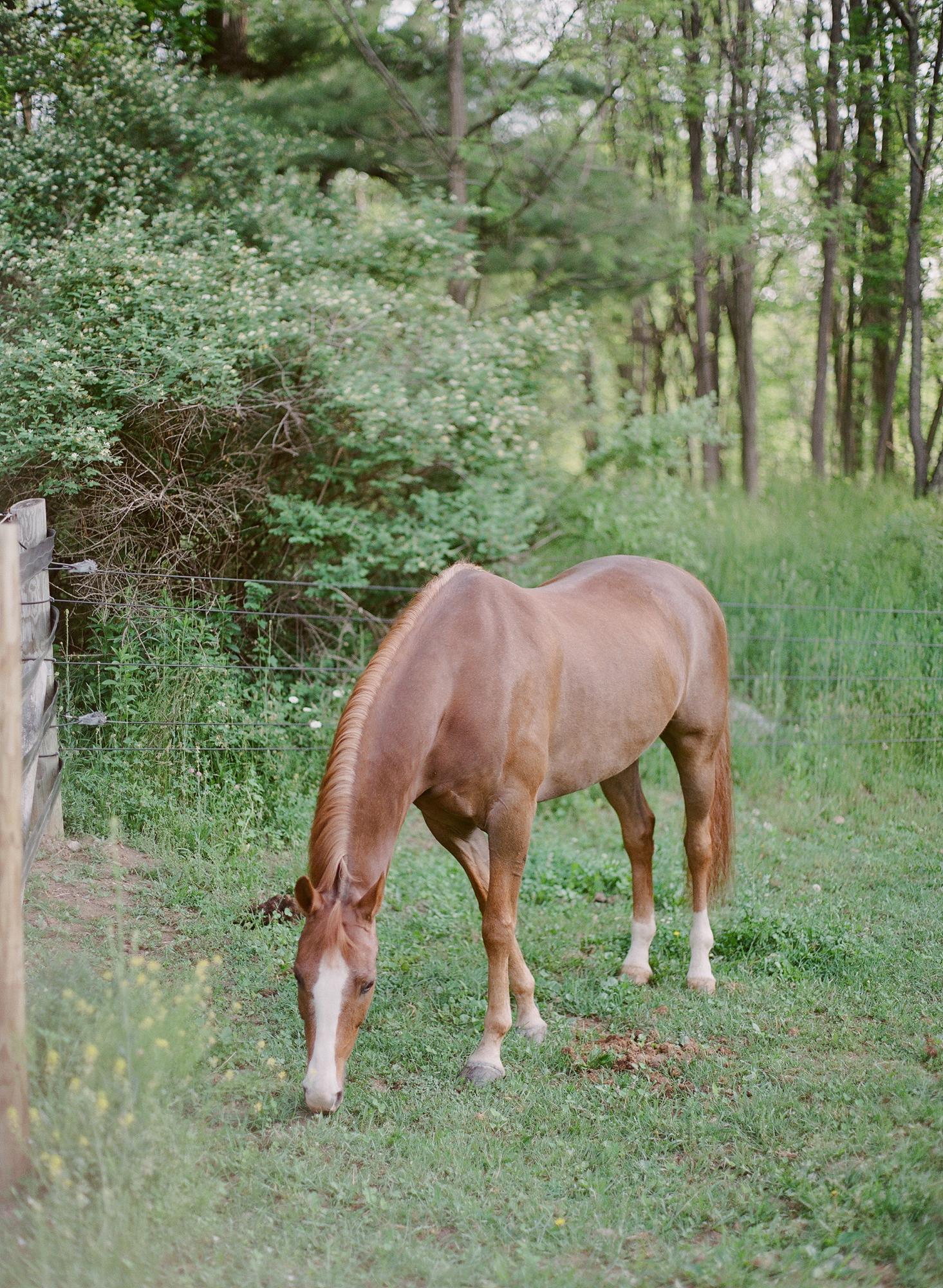 Horse Photography Saratoga Springs NY05.jpg